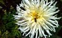 Desde mi jardín