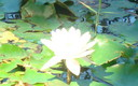 Water Flower