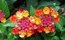 Crónicas del Jardín Botánico agosto 2015