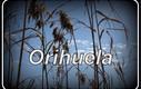 BENIDORM. De paseo por Orihuela.
