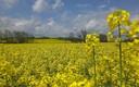paisaje contraste amarillo y azul
