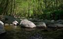 El Montseny, bosques de leyenda ...