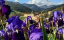 Primavera en San Millán de la Cogolla