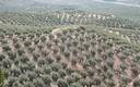 Entre olivares desde Jaén (Parte 428)