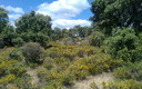 Primavera con todo su esplendor en Argañin.
