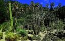 Jardín de cactus Costa y Llobera de Barcerlona