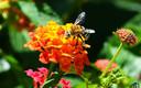 ¡Al rico néctar!