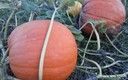 el otoño y sus manjares