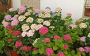 flores de juli