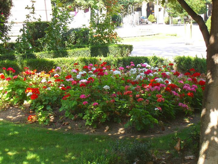 Fotos de bellos jardines de logro o for Jardines bellos fotos