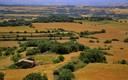 Dorados campos de cereal