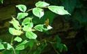 Plantas e insectos