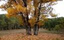 La Sierra de Cazorla nos deslumbra en otoño