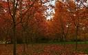 Simplemente otoño