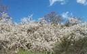primavera en valle de Urbion