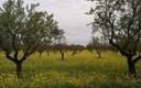 La primavera en La Poblachuela