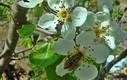 Flores de árboles y arbustos