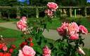 Jardín de rosas Cervantes