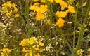 La colza adorna los campos