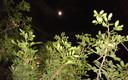 noche en el rio alharabe