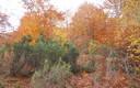 Gorbea, el otoño en su esplendor