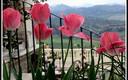 Flores de primavera en Ronda