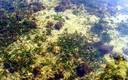 otoño en el Mar Menor